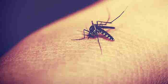 2 Biotech Companies Lead the Race to Develop a Zika Vaccine