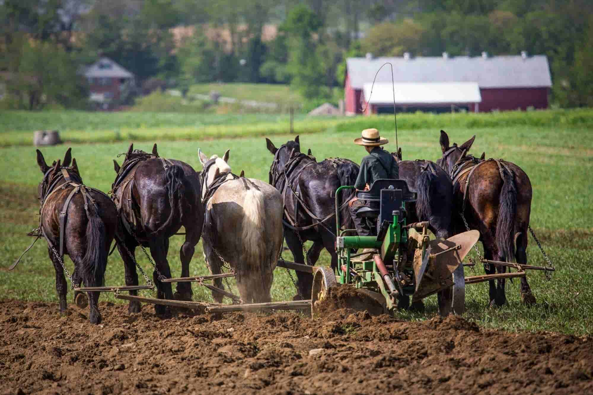 What the Amish Can Teach You About Building a Successful Business