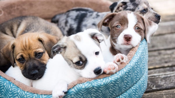 How To Start A Pet Business