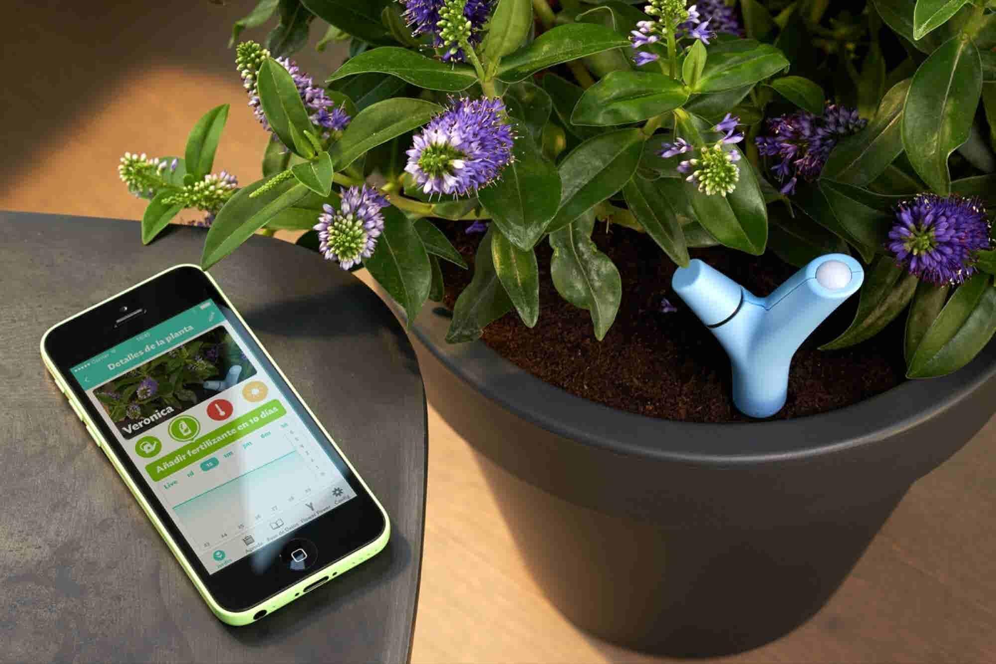 For The Nature Lover: Parrot Flower Power
