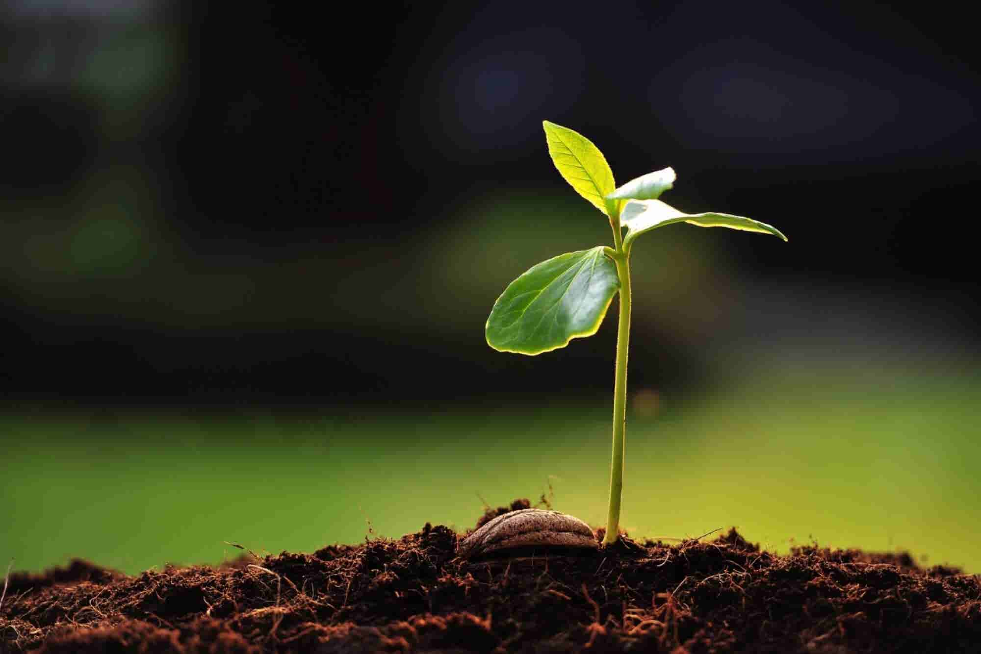 What Tending a Vegetable Garden Can Teach You About Business