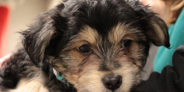 What Happens When Uber Brings Puppies to Your Office