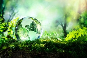 This Is Why You should Become Green Energy Entrepreneurs