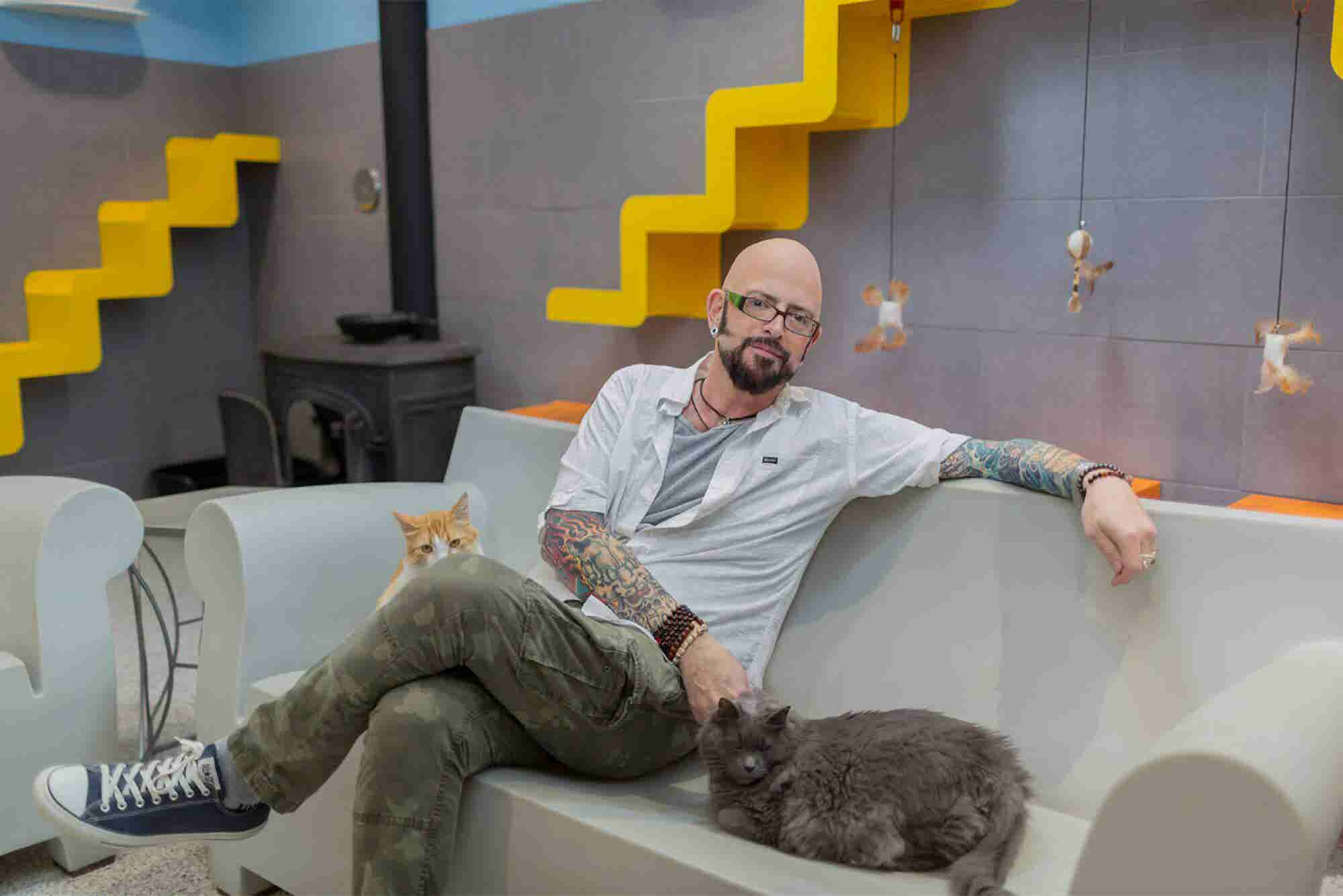 3 Sharp Business Lessons Entrepreneurs Can Learn From Cats, Care of th...