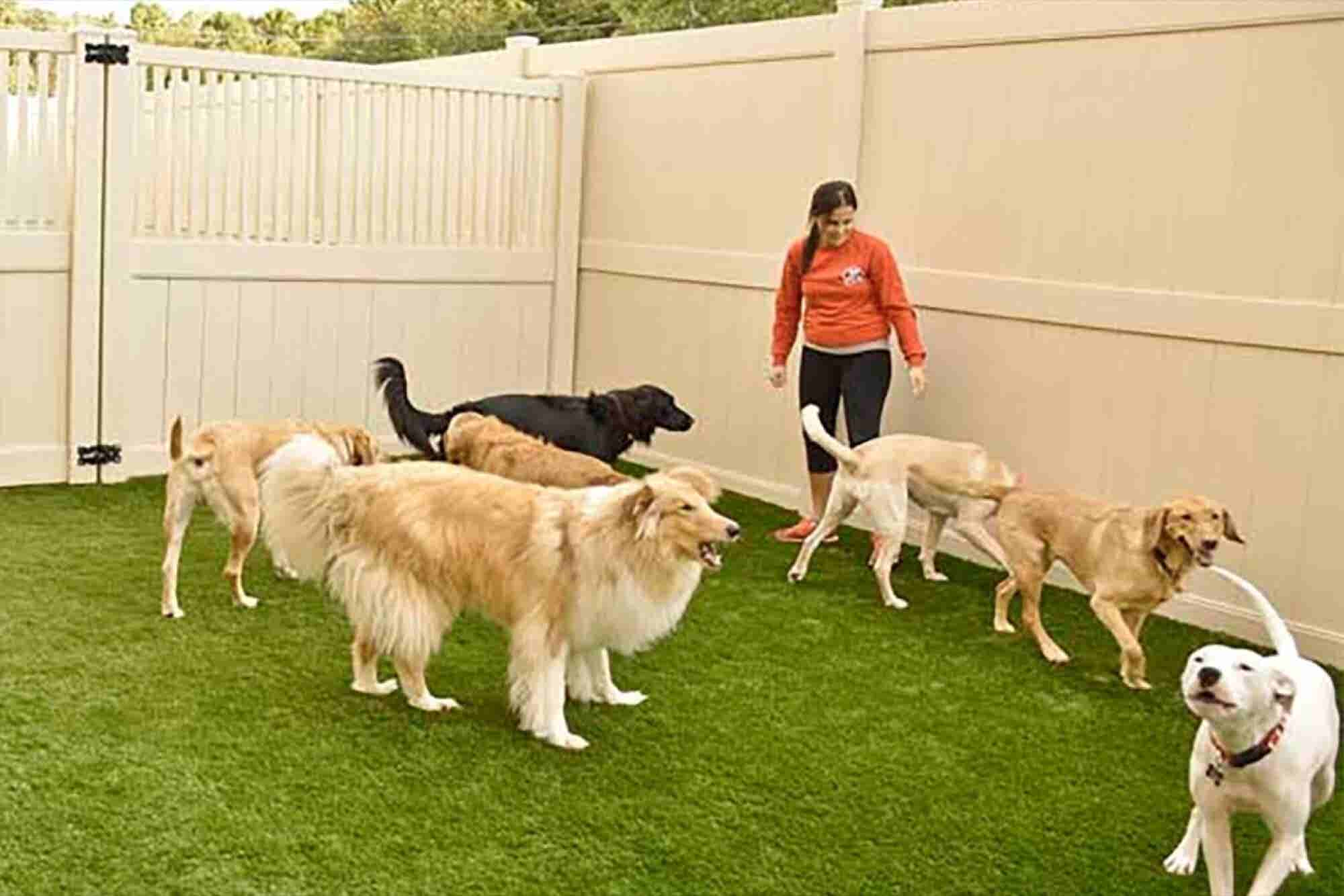 Franchise of the Day: Make Sure Your Pup Has a Fun Friday, Too