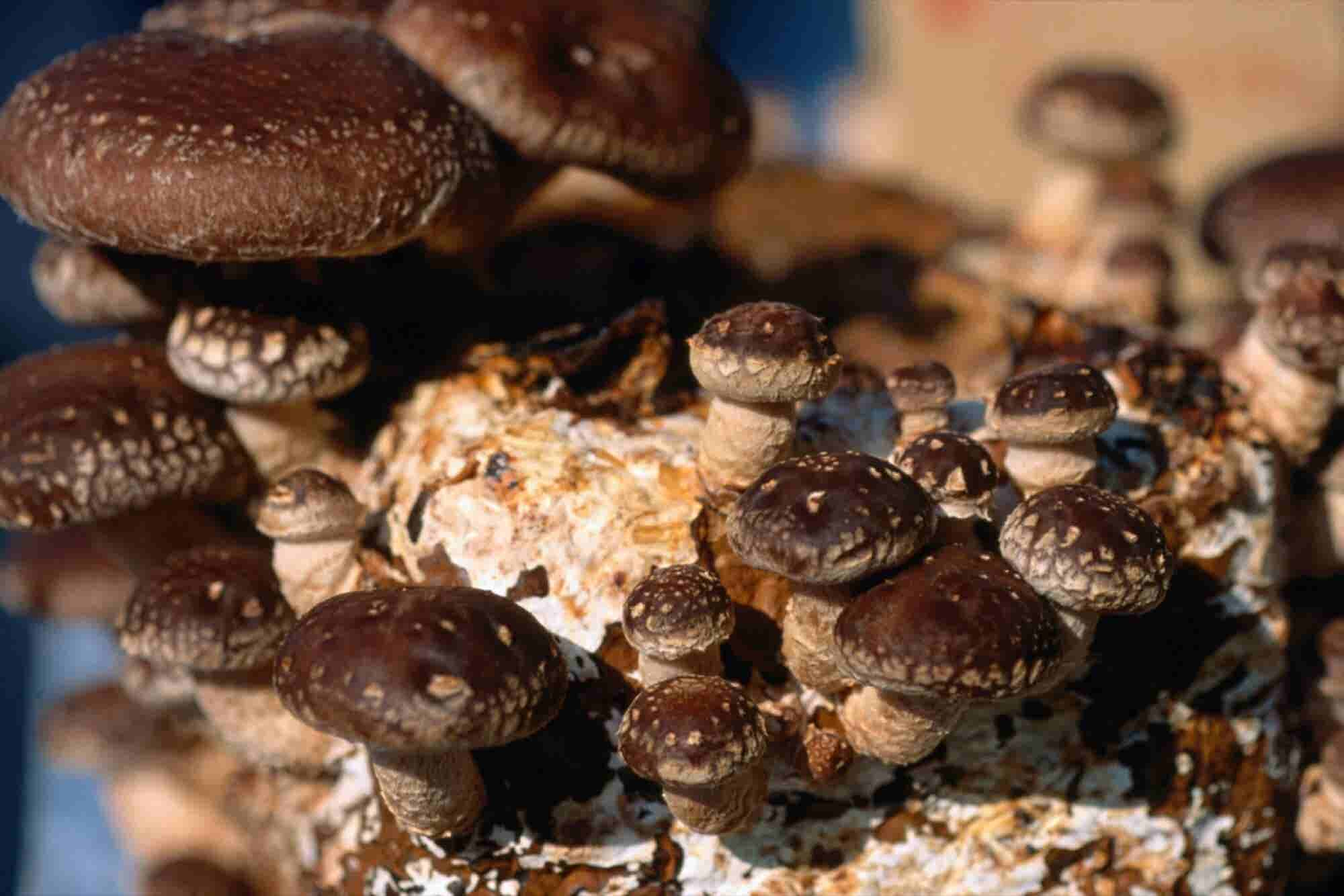 Stop Treating Your Employees Like Mushrooms