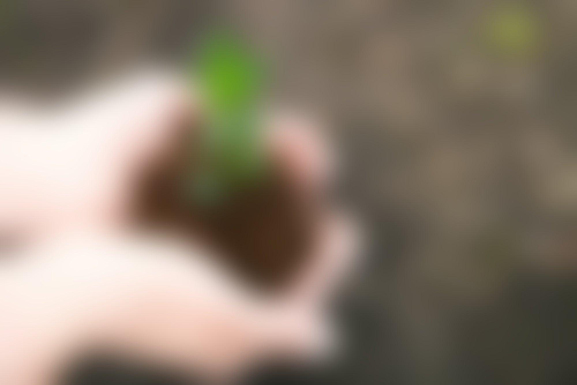 Estudiantes de Veracruz ganan Premio Joven Emprendedor Forestal