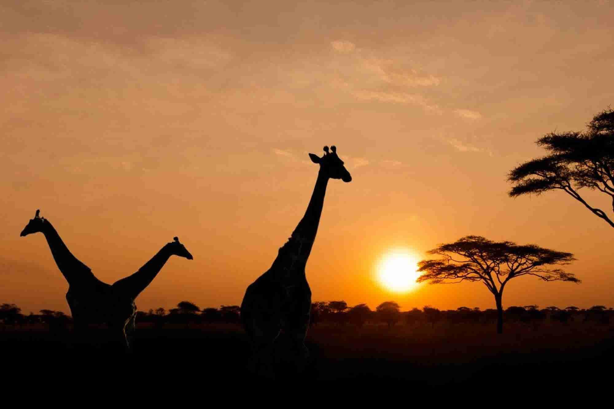Emprendedores mexicanos generan energía limpia en África