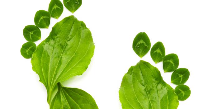 7 pasos para hacer tu negocio más verde