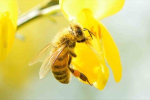 Sweet Lessons From The Honeybee