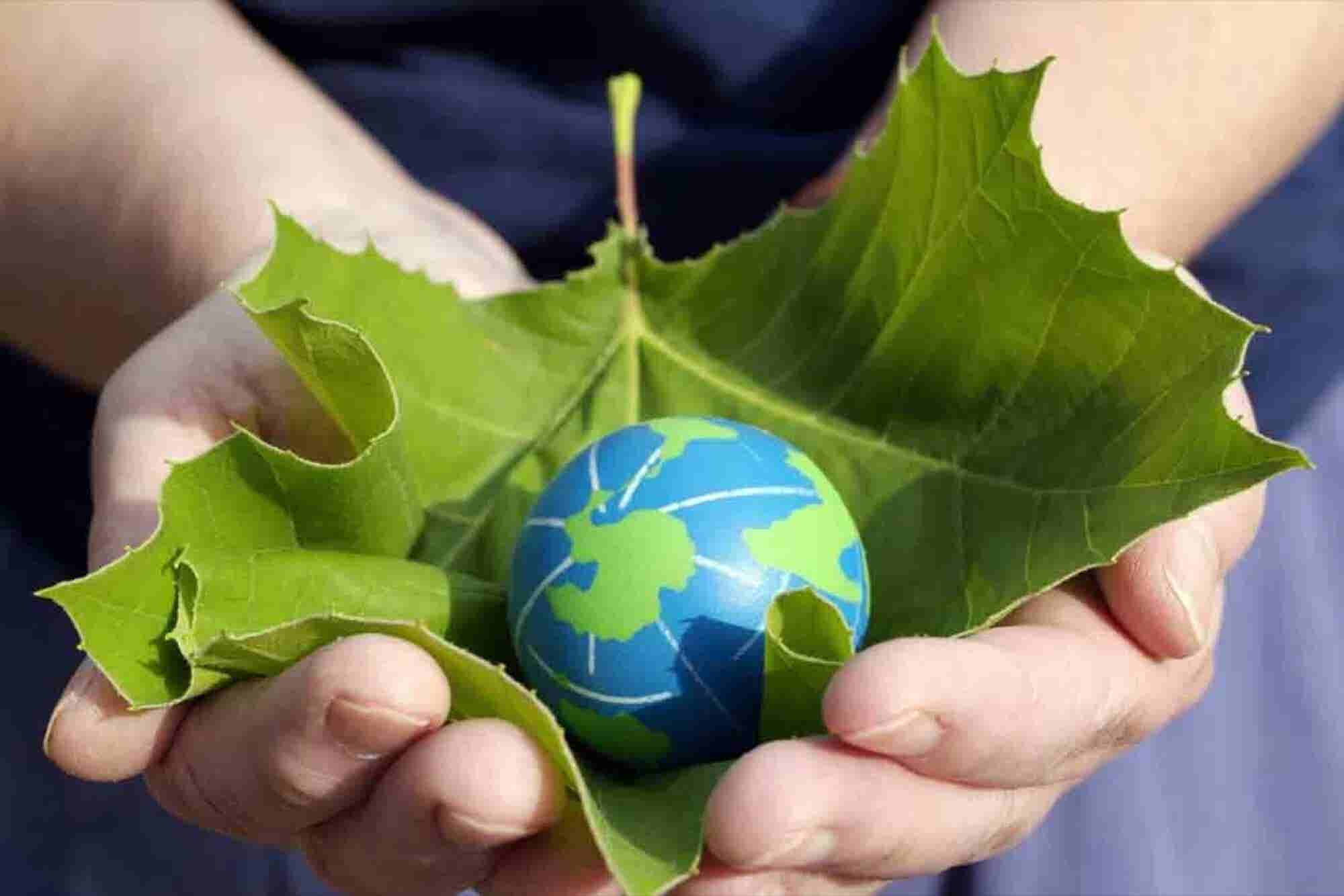 What Big Tech Companies Can Teach Your Business About Going Green