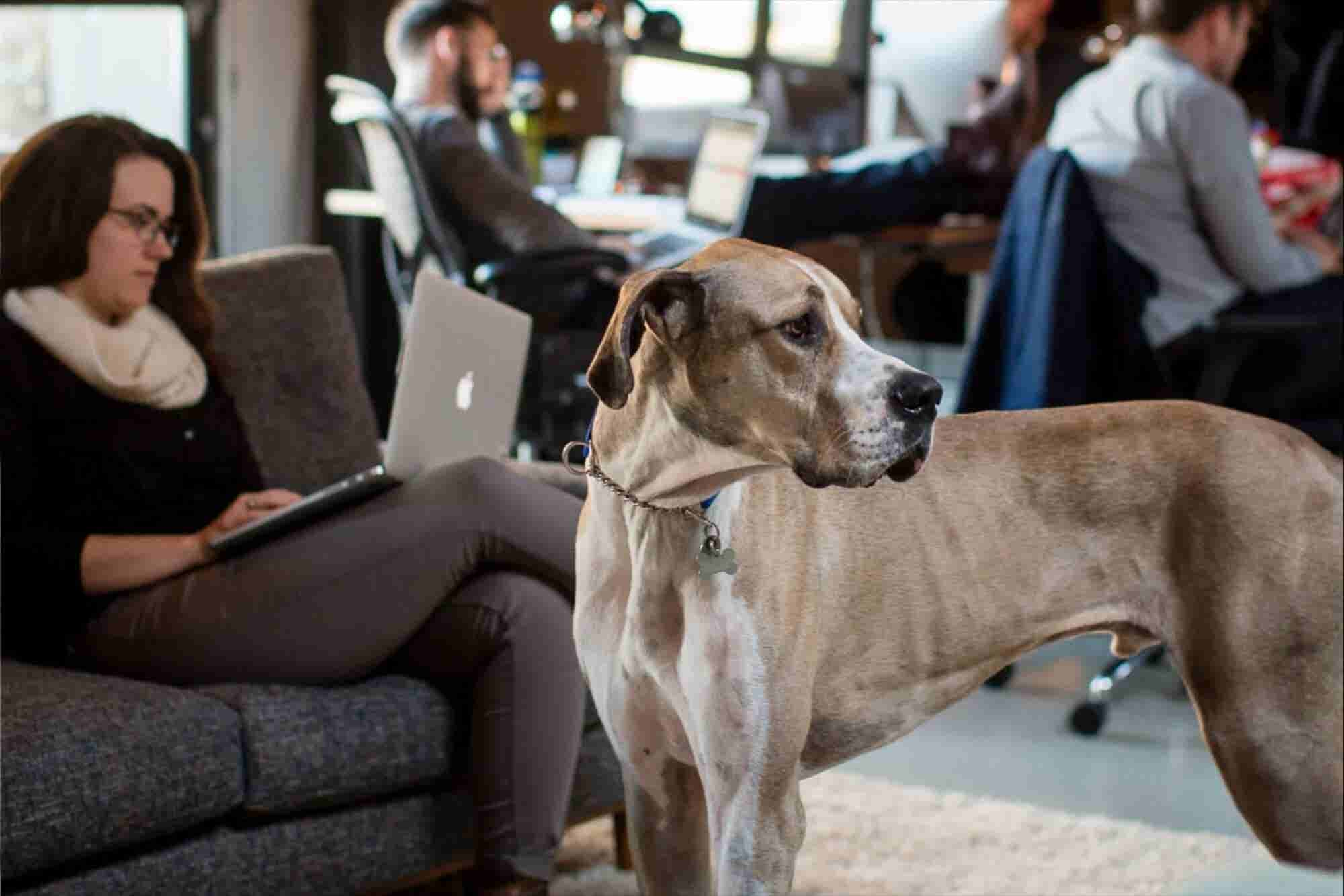 Bring Your Dog to Work Day Is Every Day for These 8 Companies