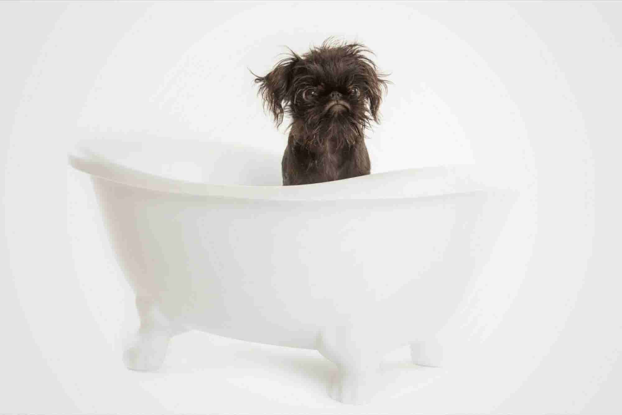 9 Low-Cost Business Ideas for Animal Lovers