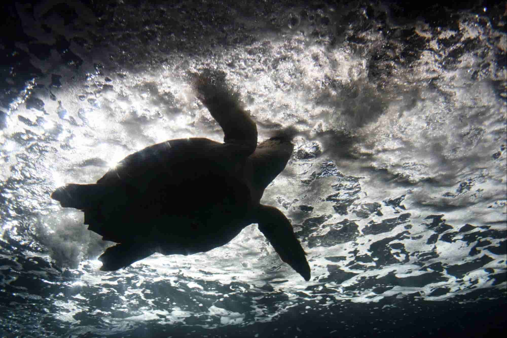 These 'Biohybrid' Robots Crawl Like Sea Turtles