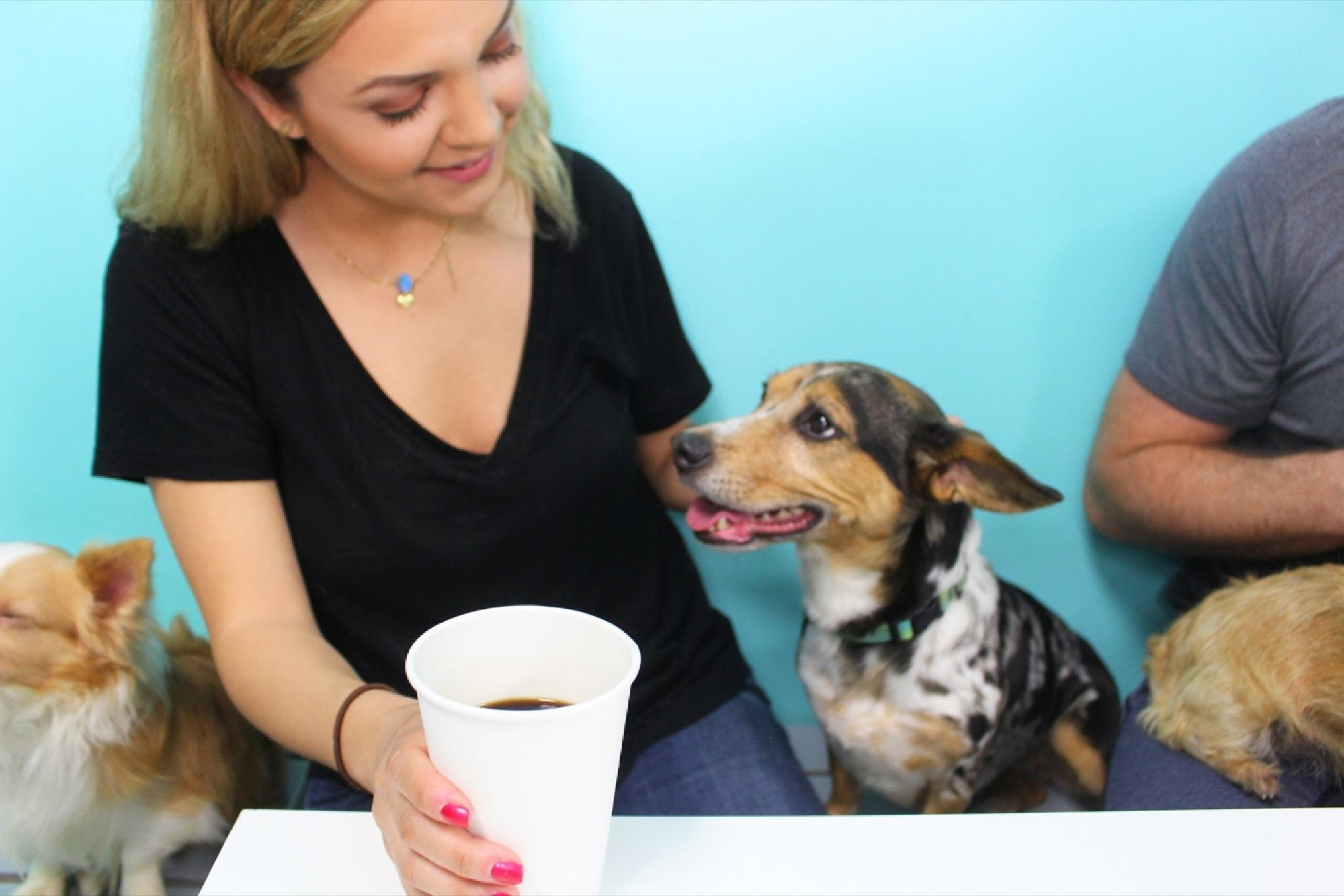 Want to Run a Pet Café? These Founders' Tips Can Help