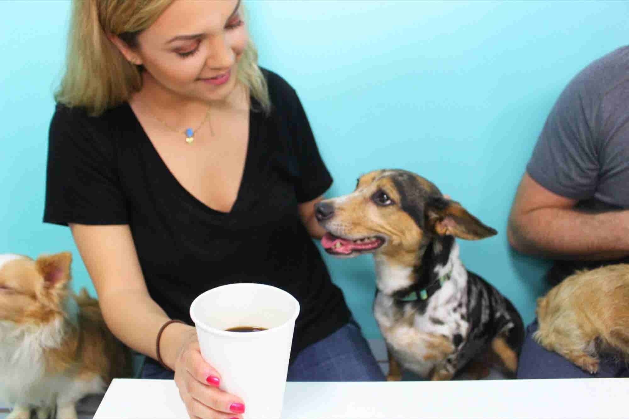 Want to Run a Pet Café? These Founders' Tips Can Help.