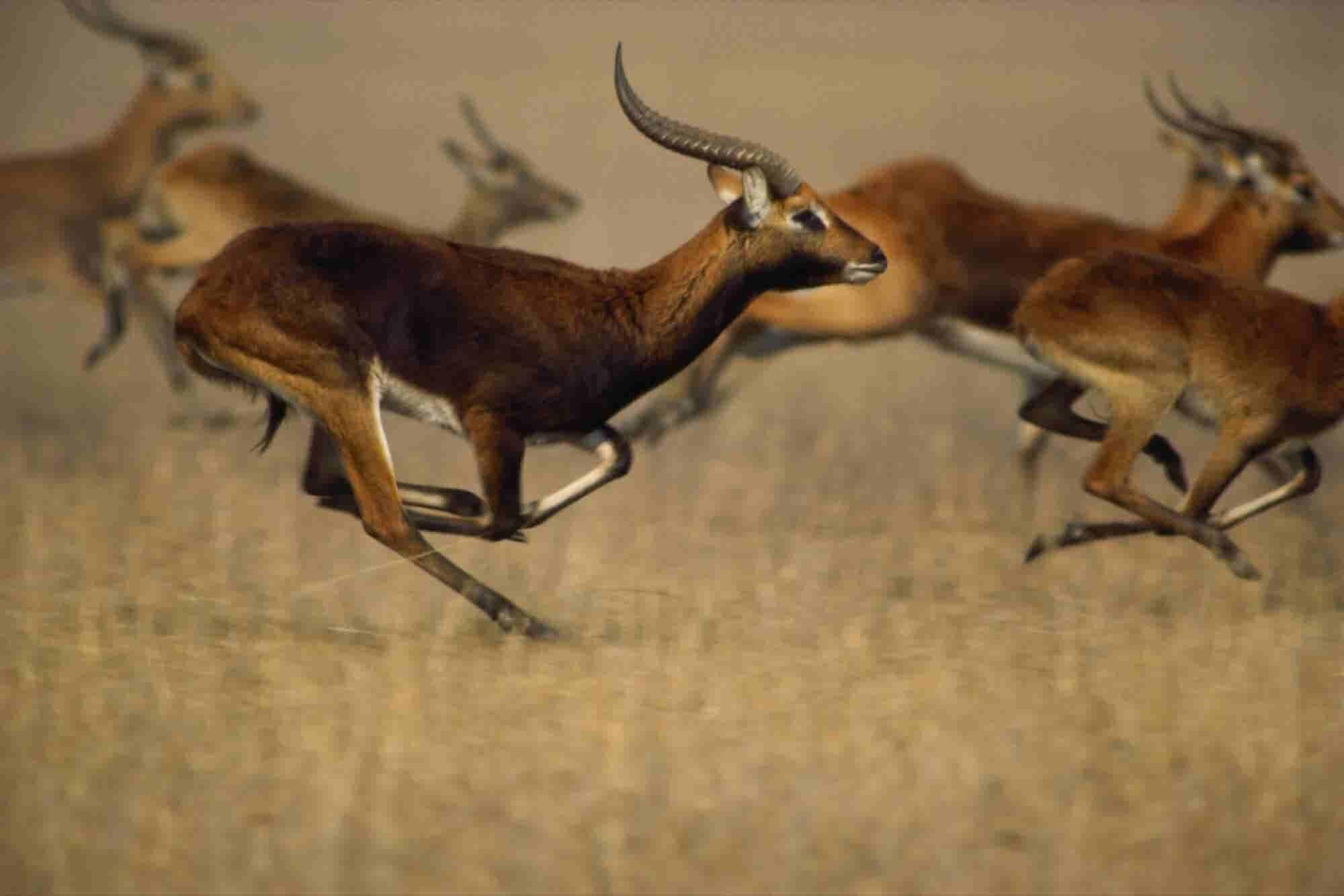 The Second Slowest Gazelle: A Secret to Success
