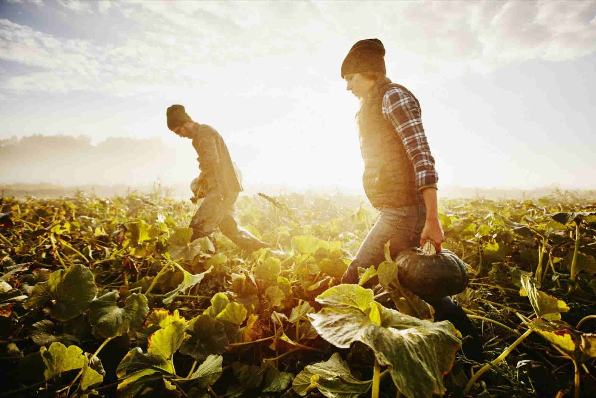 Hunter? Farmer? Your Natural Mindset Helps Determine How Many Deals You Close.