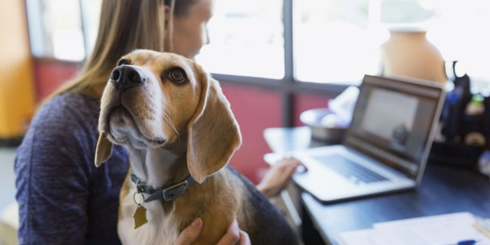 4 Products Every Dog-Friendly Office Should Consider