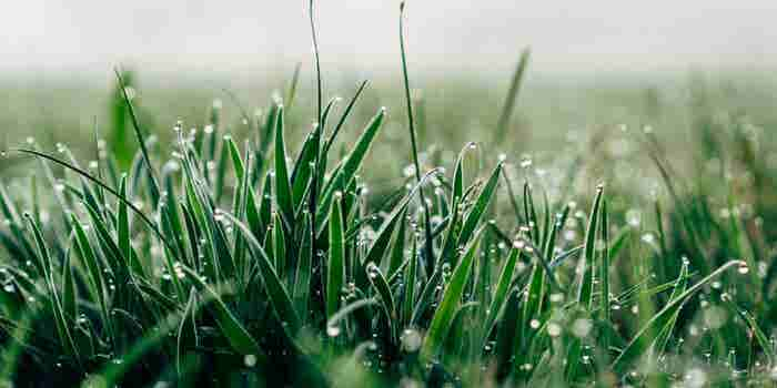 Just Ask a Blade of Grass What It Takes to Break Through