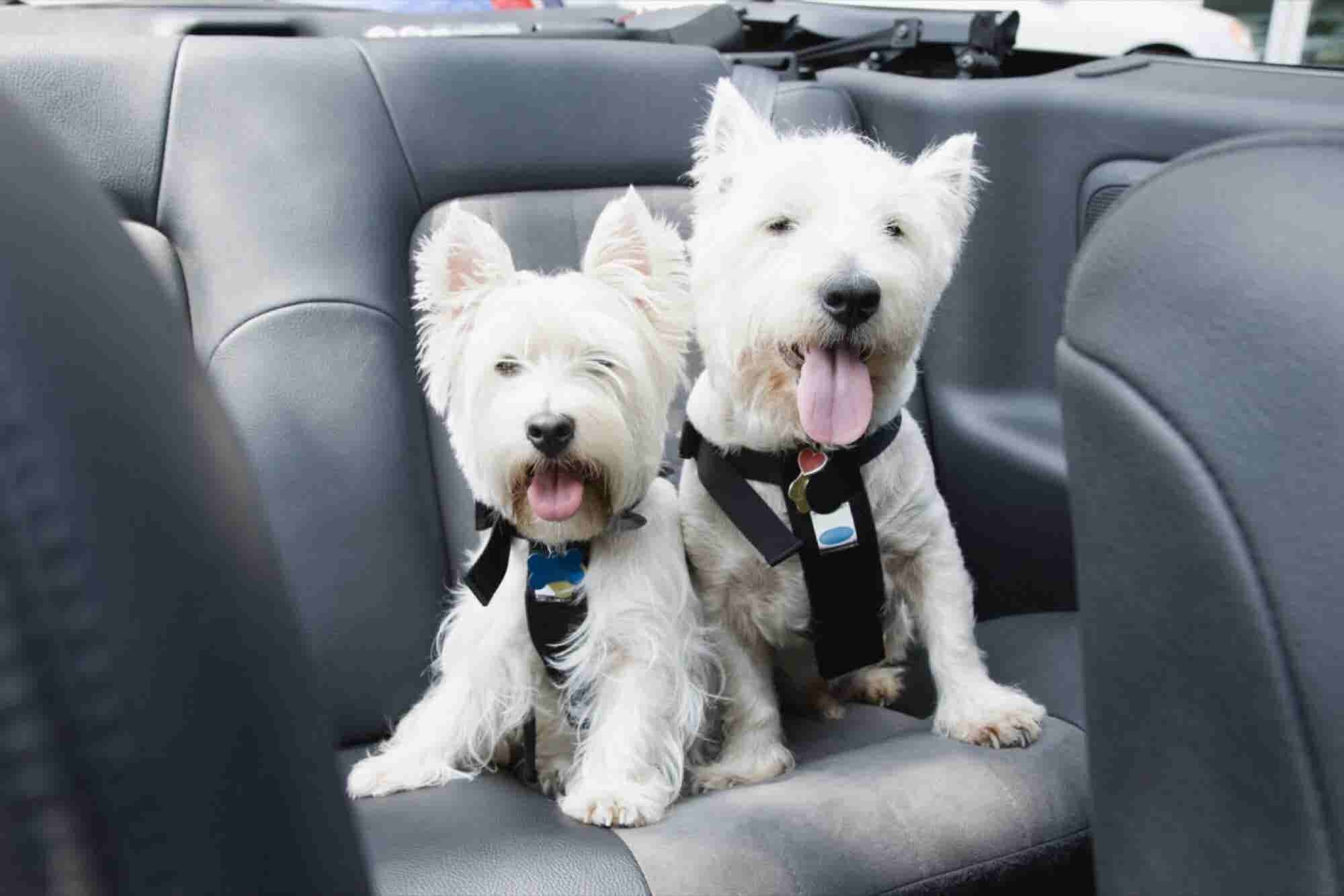 Traveling With Your Pet This Holiday? Bone Voyage!