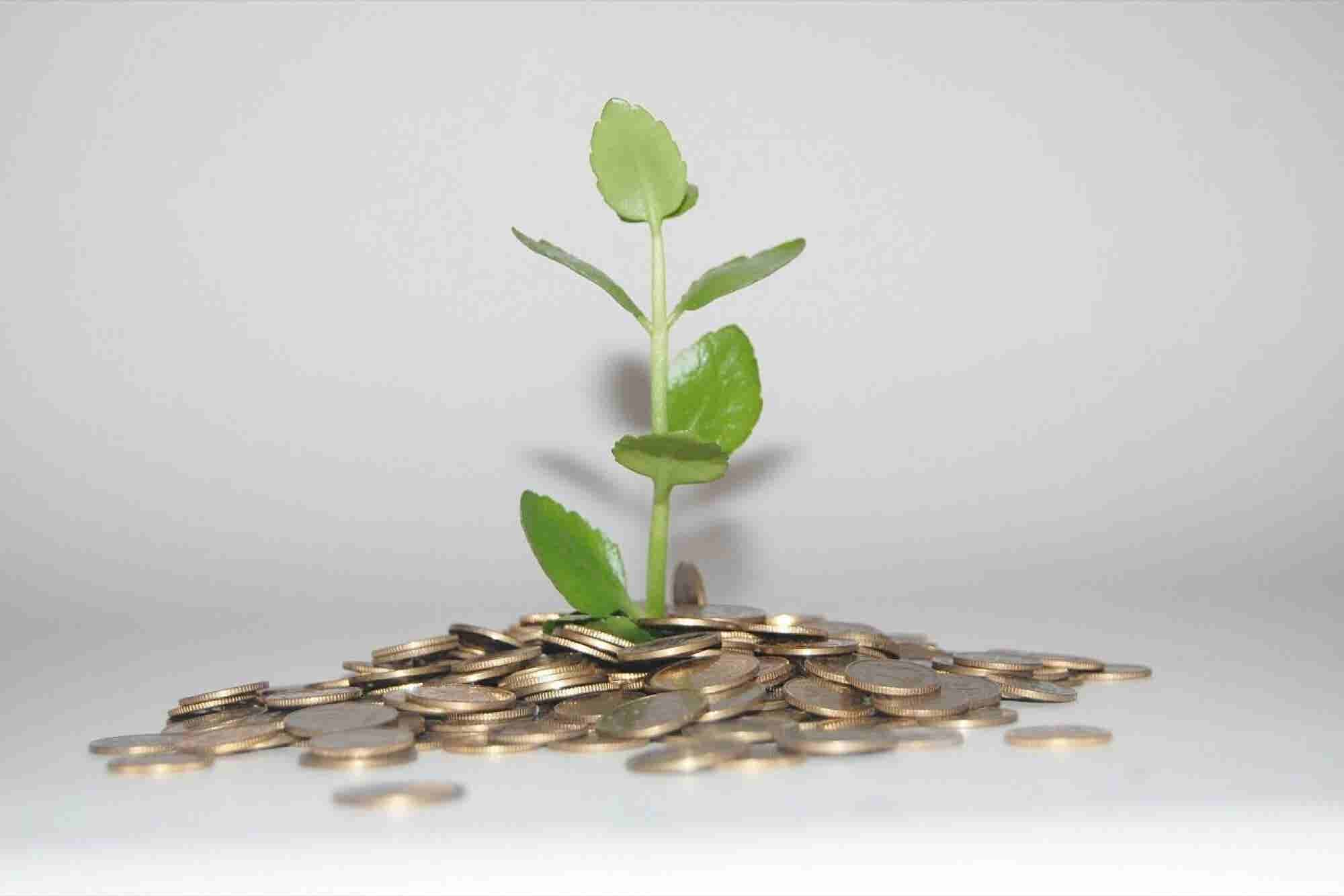 #5 Money Management Tips for Small businesses
