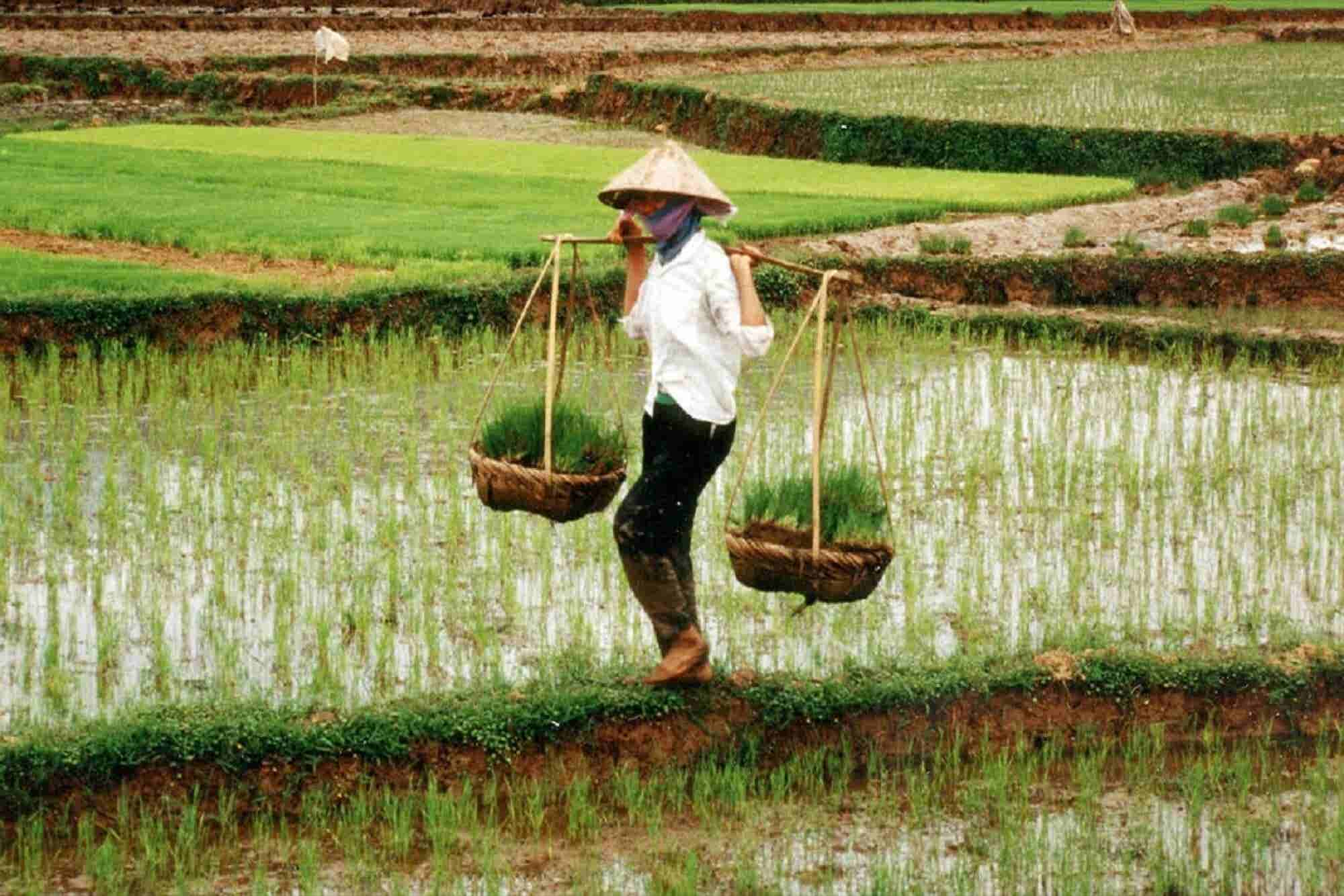 Trends That Will Drive Agri-Tech Sector in 2017