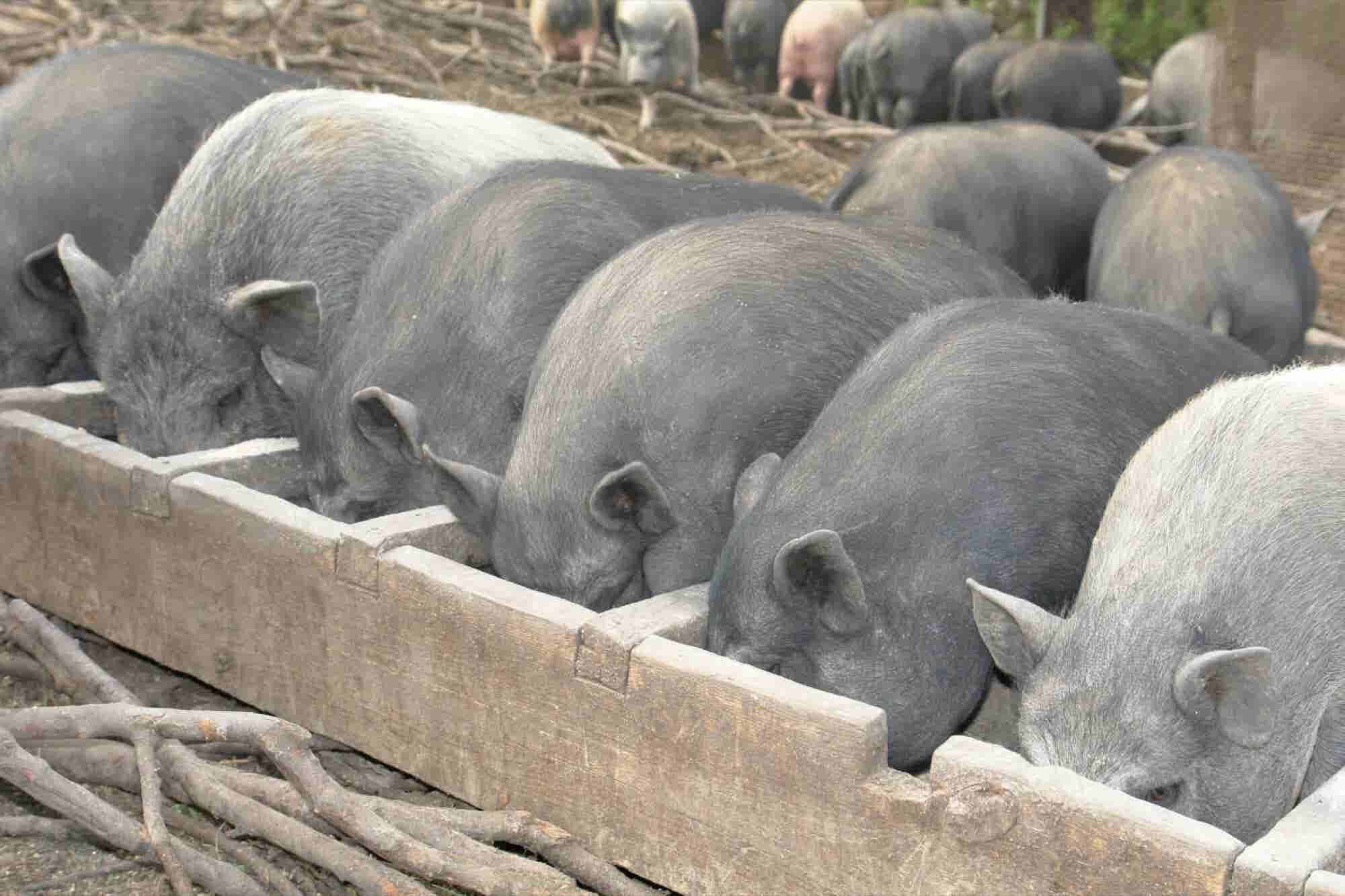 Lean Hogs. And 6 Other Unusual Investments That Can Pay Off.
