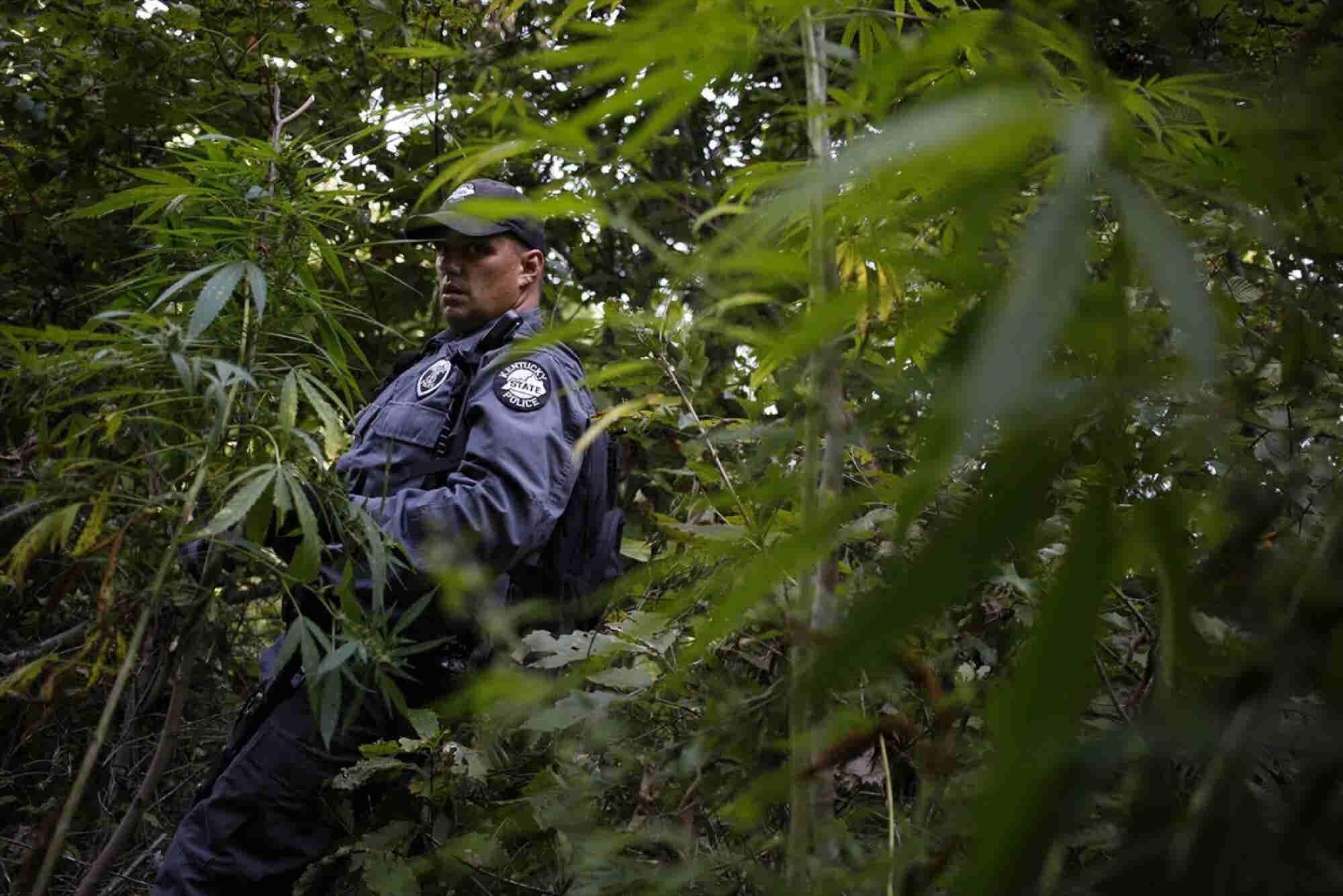 Survey Finds Most Police Officers Support Medical Marijuana