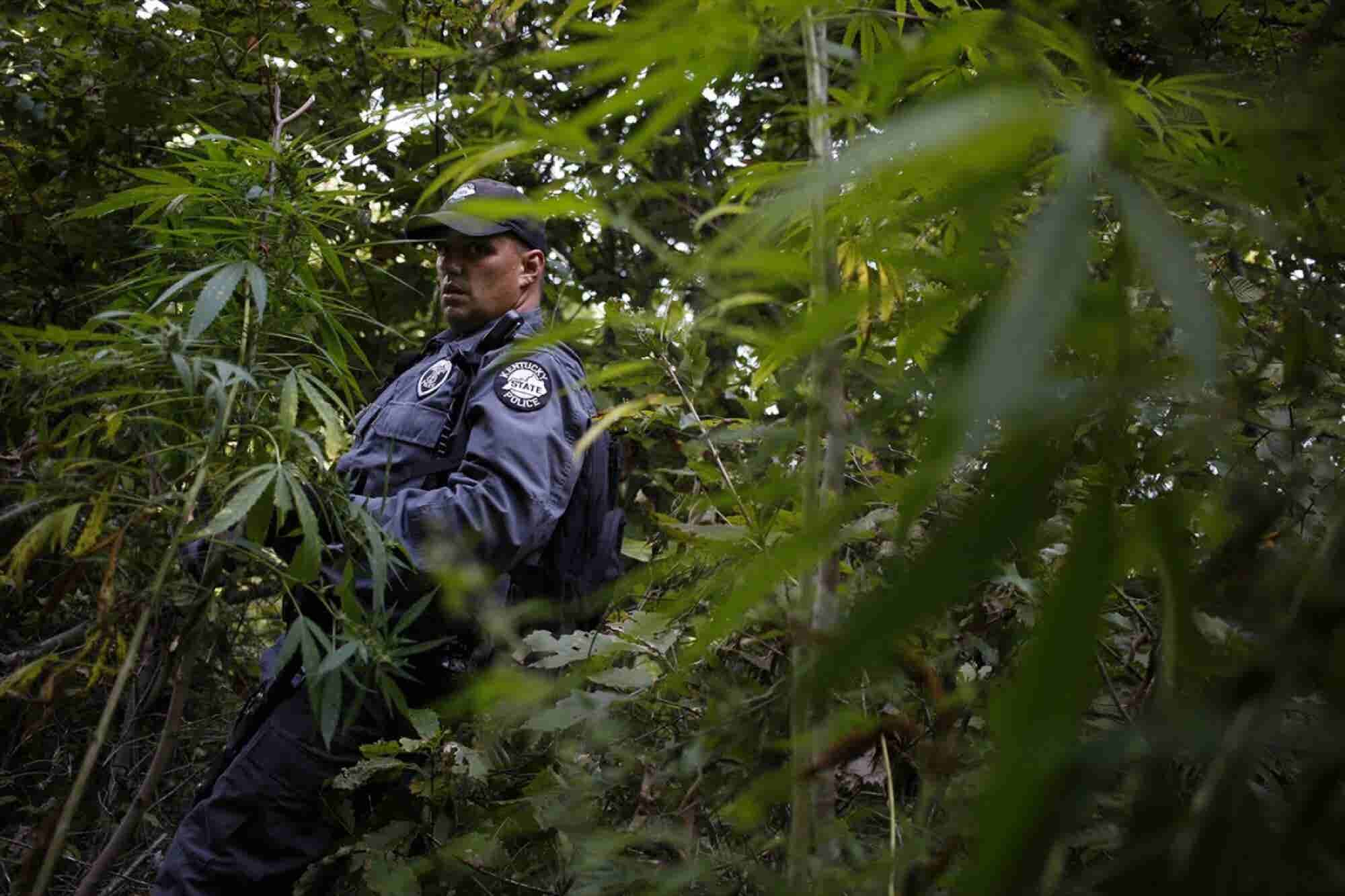 Survey Finds Most Police Officers Support Medical Marijuana