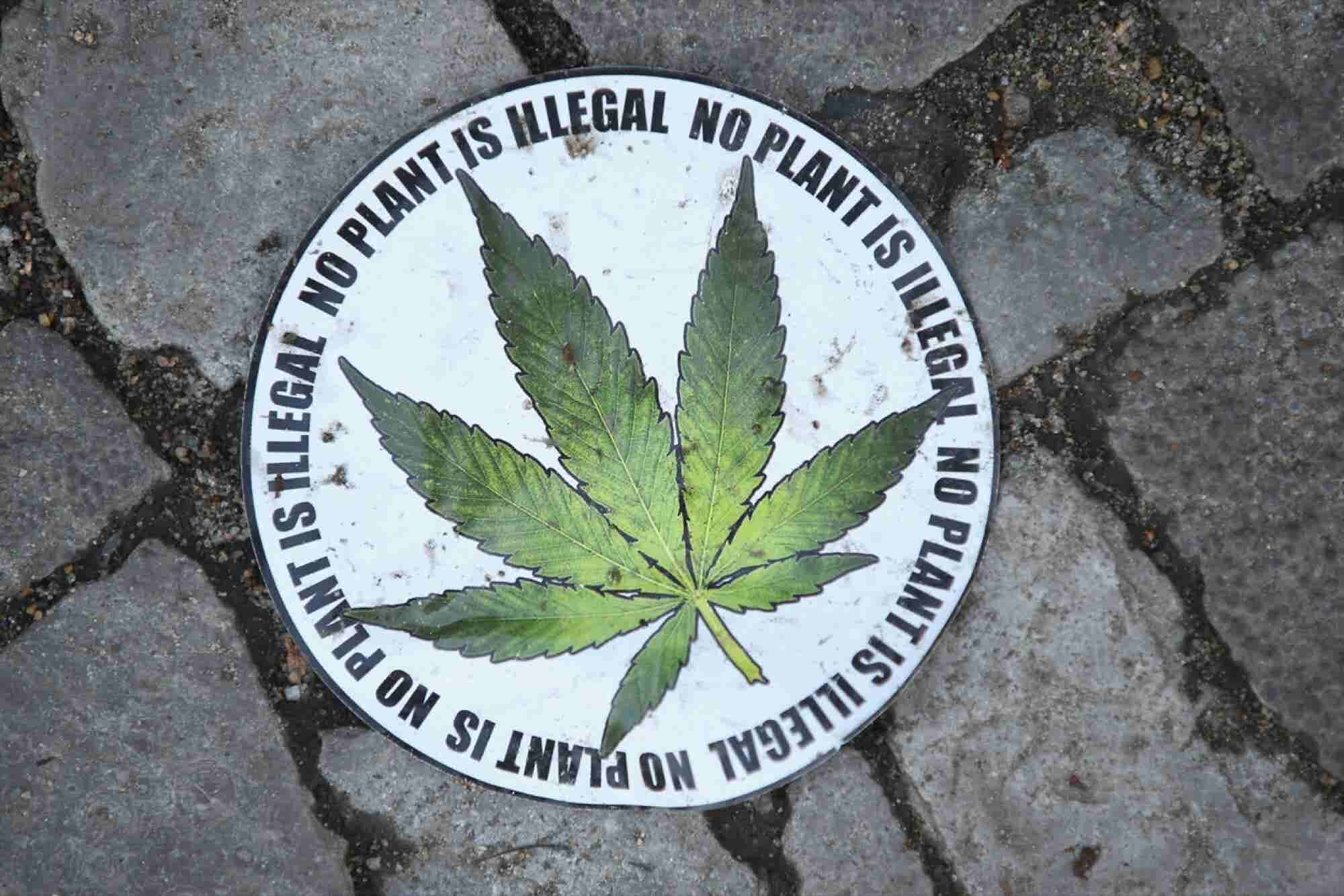 Marijuana Lobby Grows As Legalization Spreads Throughout Country