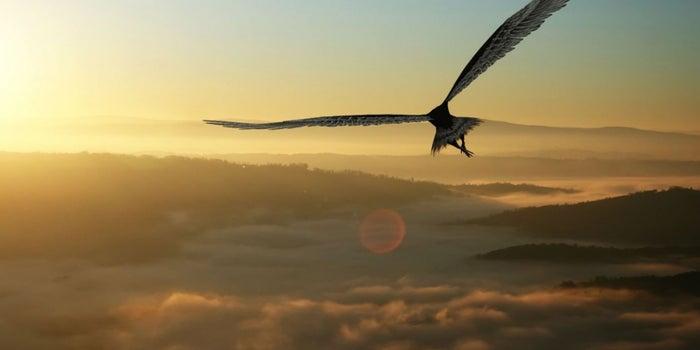 Cómo superar la dolorosa renovación del águila real