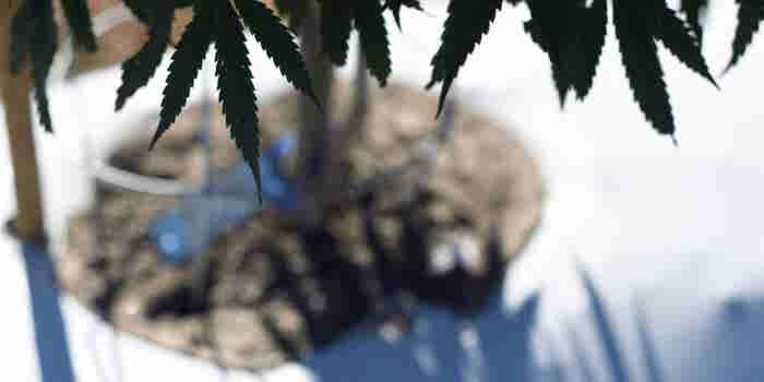 Colorado Takes Aim at the Marijuana Black Market