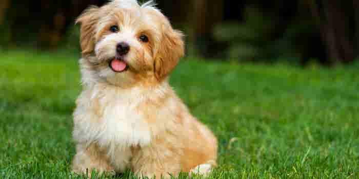 Por qué los perros son mejores líderes que tú