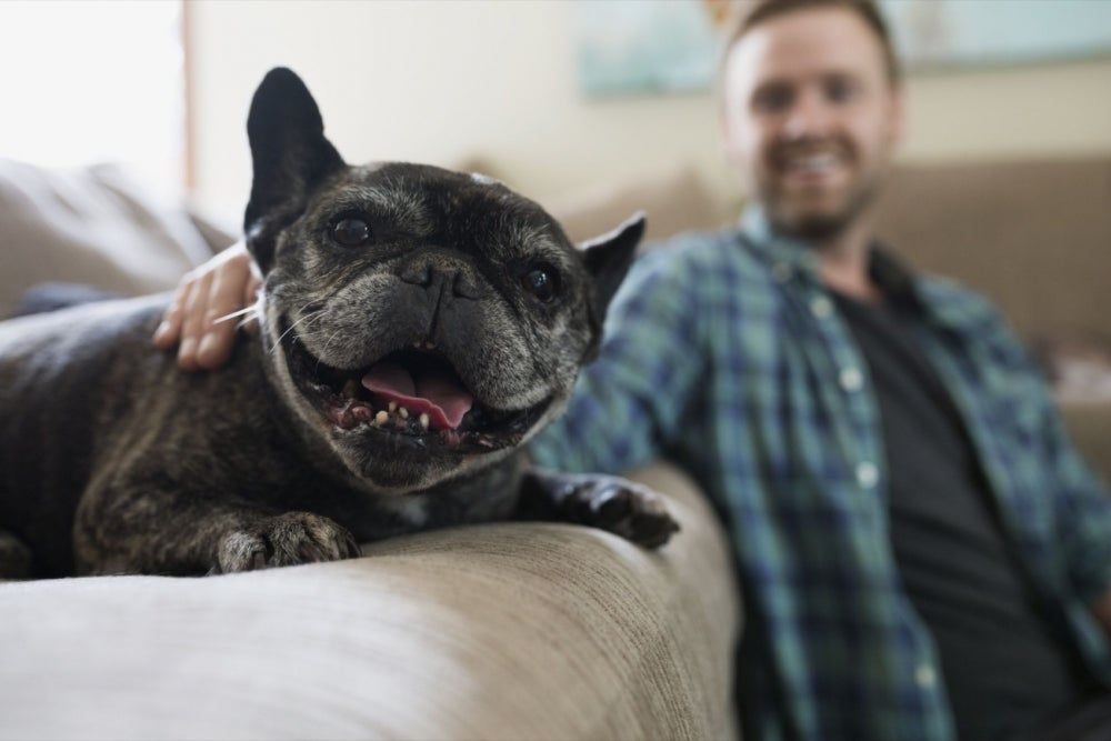 5 Franchises Animal Lovers Can Start Right Now