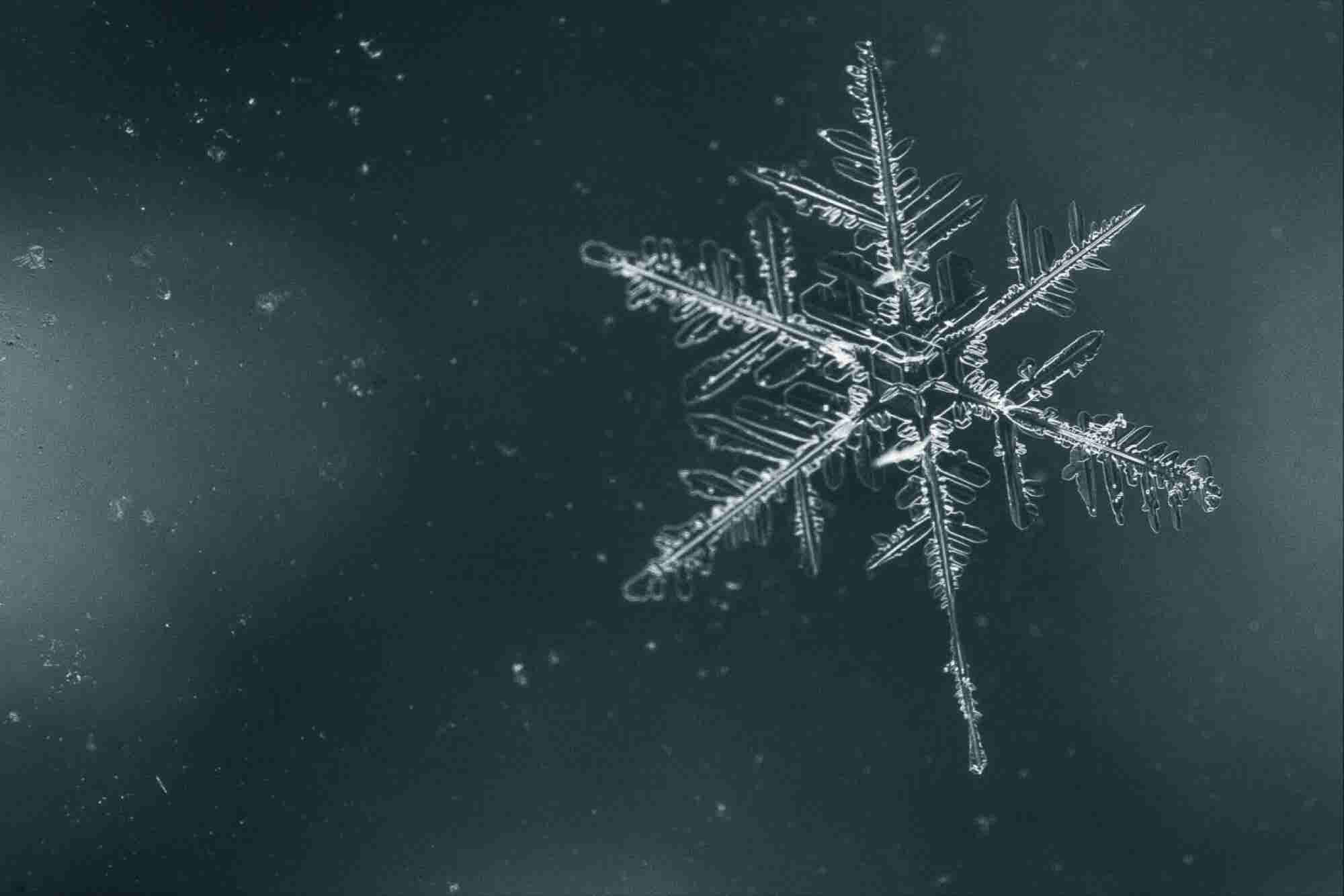 Why the 'Snowflake Test' is a Big, Big Hiring Mistake (and What to Do Instead)