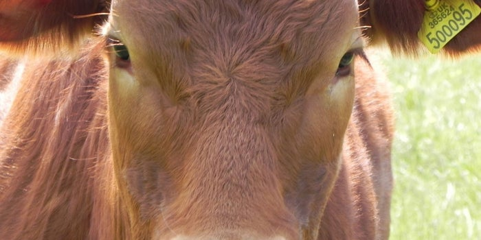 World's Biggest Beef Exporter is Banning Cow Slaughter. #3 Sectors Set To Face The Burnt
