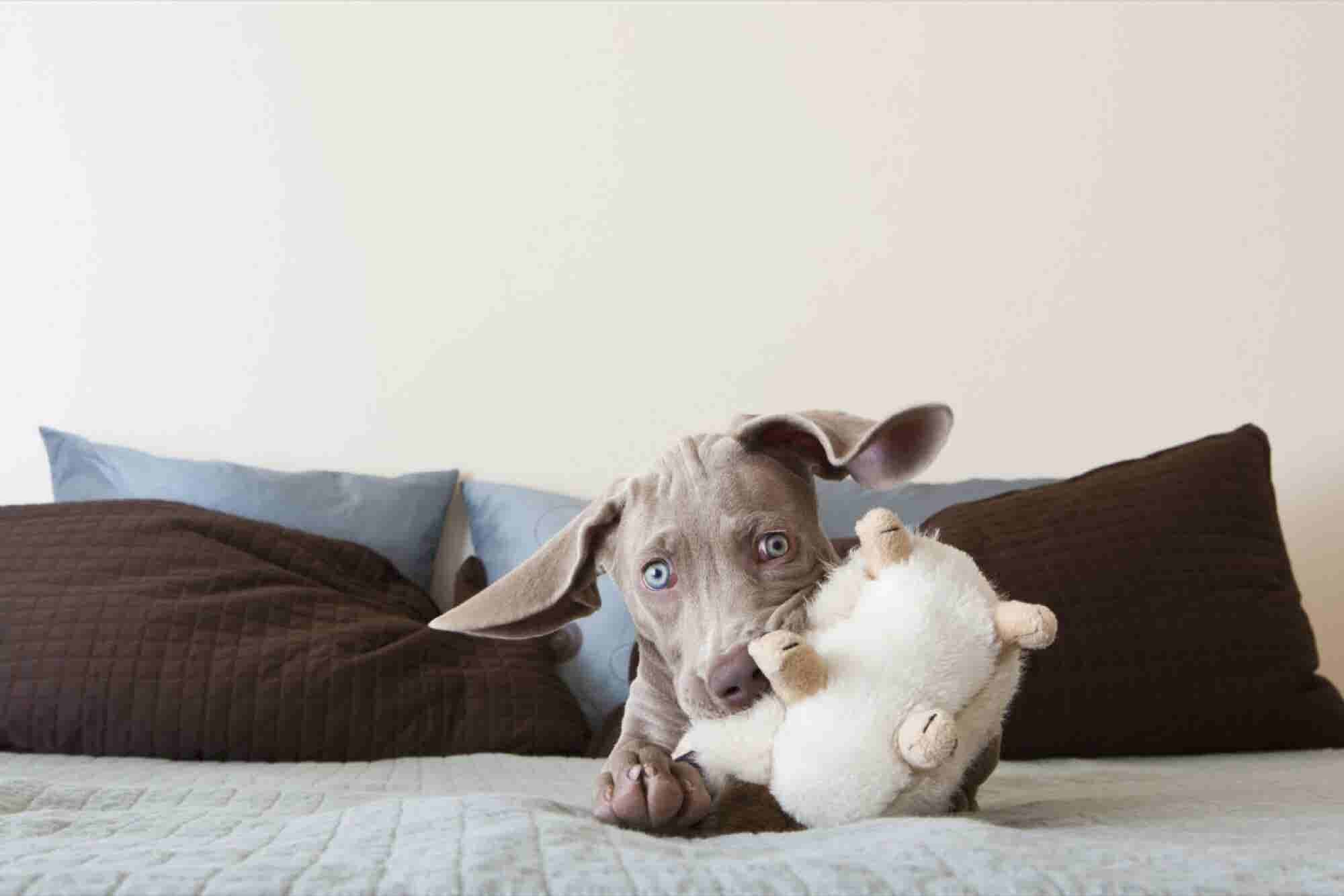 Connected Home Might Be the Next Big Thing But Connected Pet Is Big Ri...