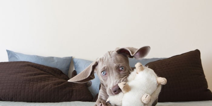 Connected Home Might Be the Next Big Thing But Connected Pet Is Big Right Now