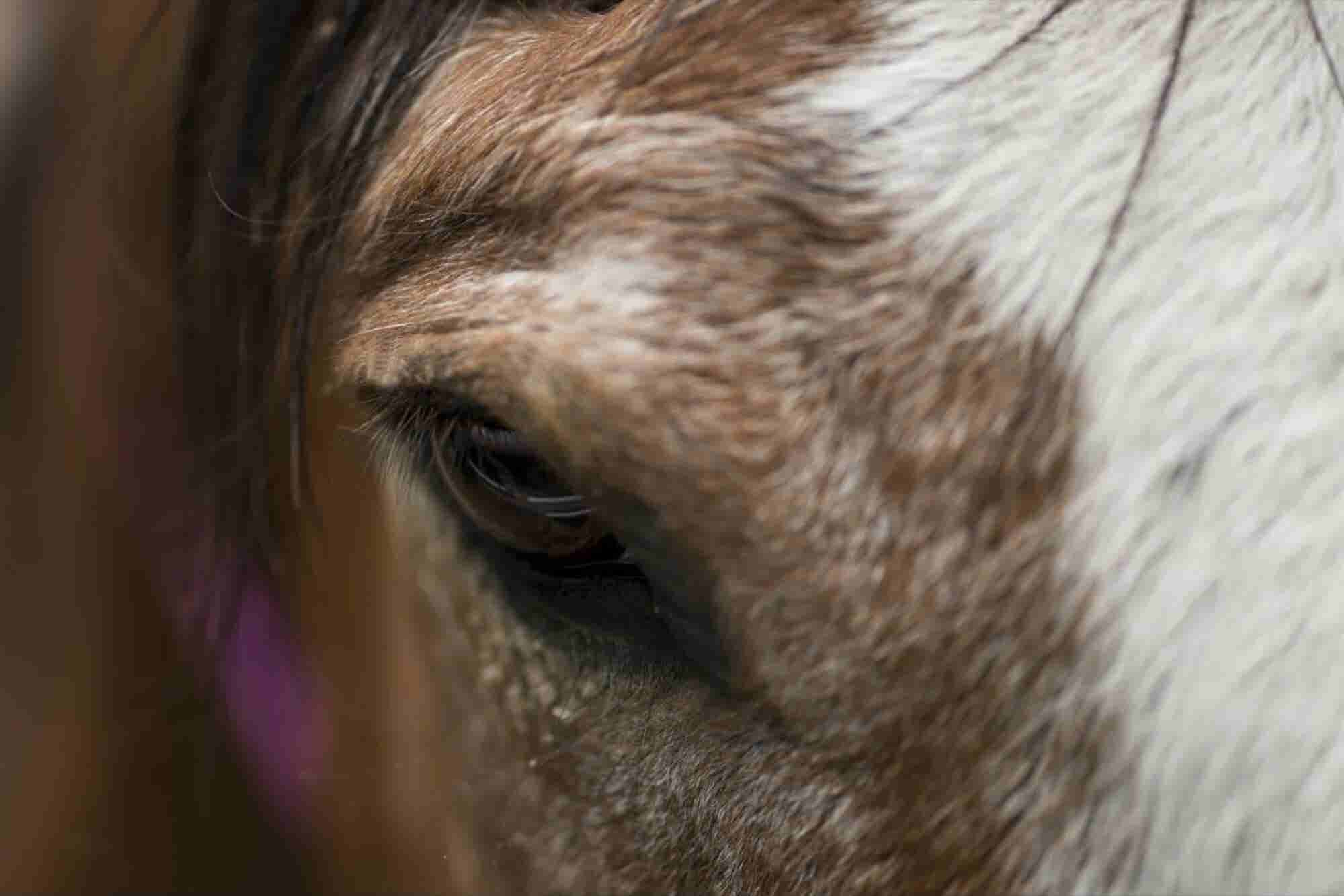 La emprendedora que se alío con caballos para formar líderes