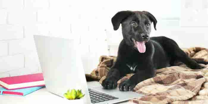 Abre un negocio pet friendly