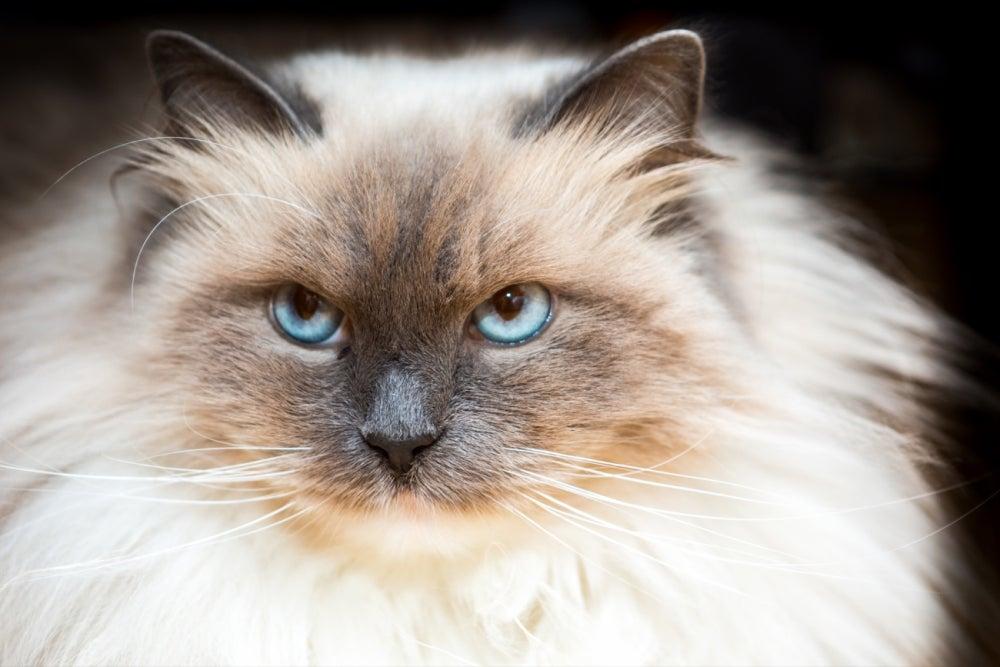 Offer pet services
