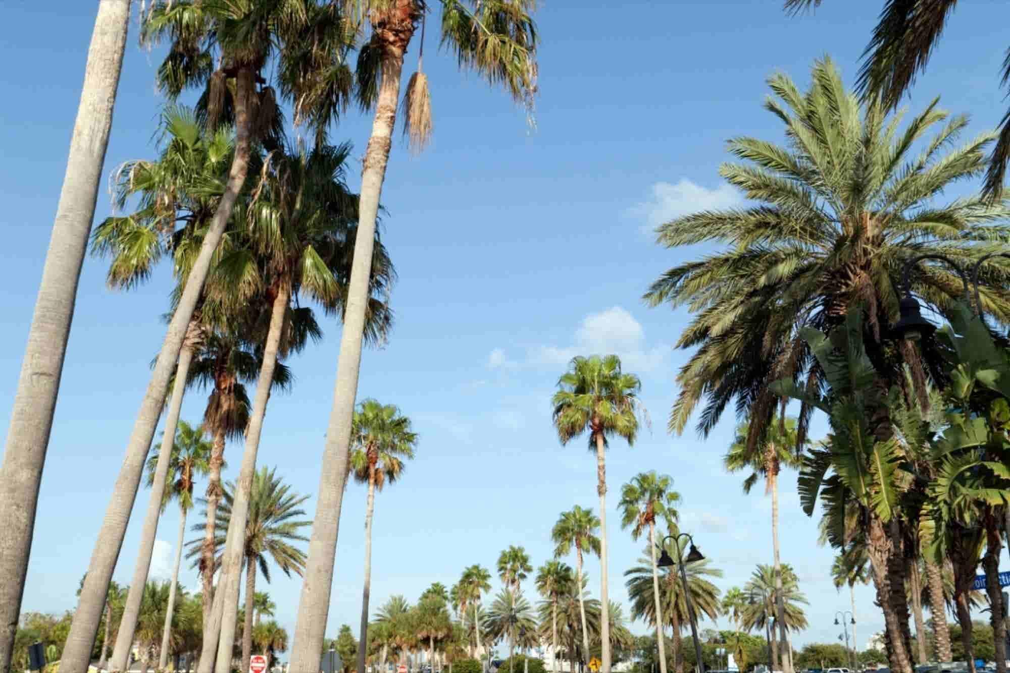 Florida Medical Marijuana System Now In Court