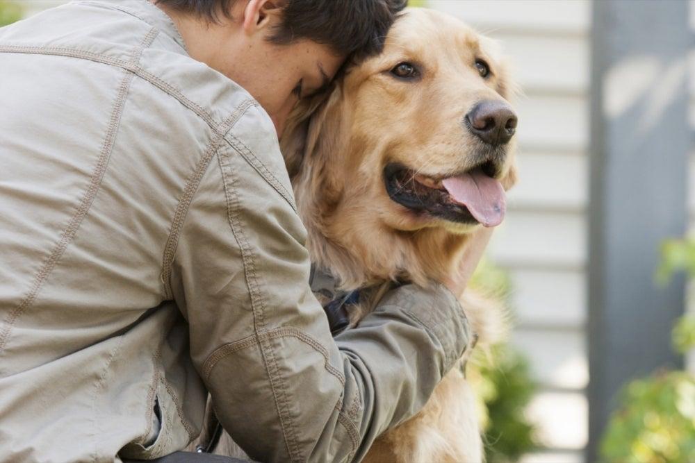 House-sitter/pet-sitter