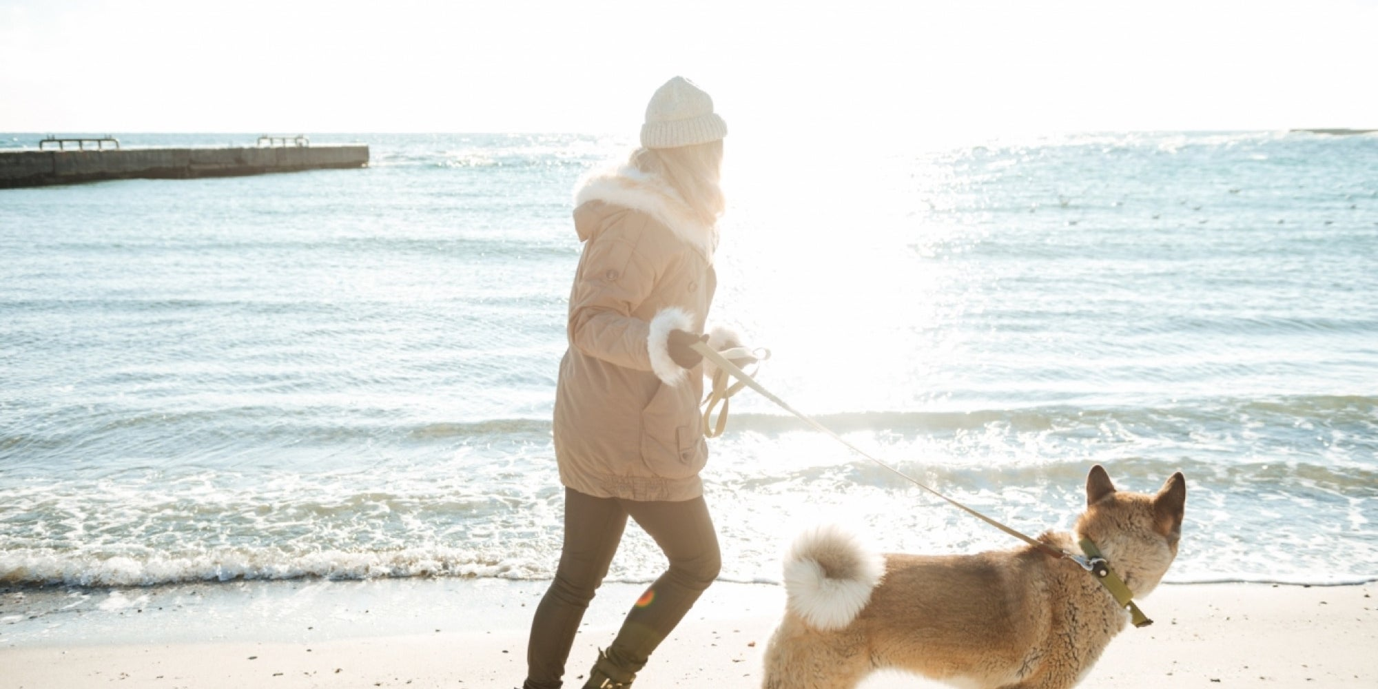 Pet Sitting and Dog Walking Business