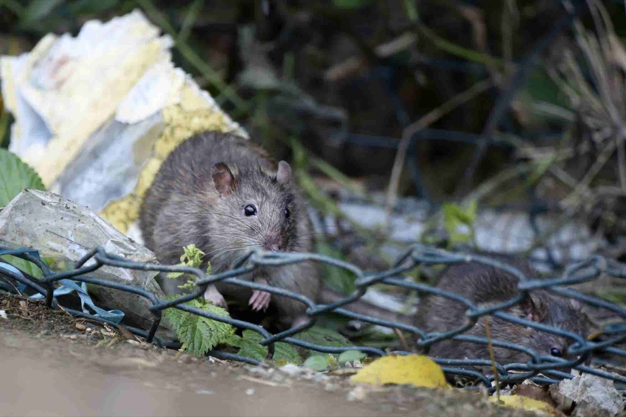 What to Do When Your Mother Tells You Your Data Resembles 'a Rat's Nest'