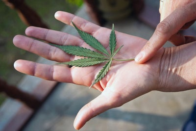 10 Ways the Cannabis Industry Is Rebranding to Meet Its Biggest Challe...
