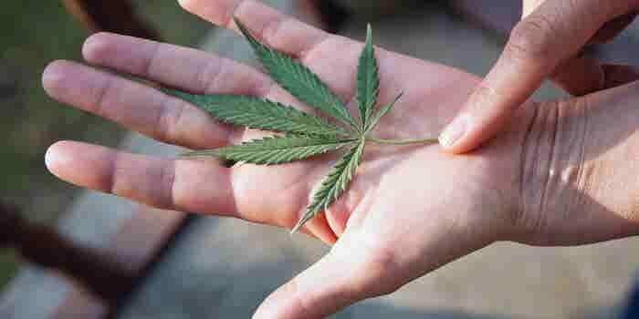 10 Ways the Cannabis Industry Is Rebranding to Meet Its Biggest Challenges