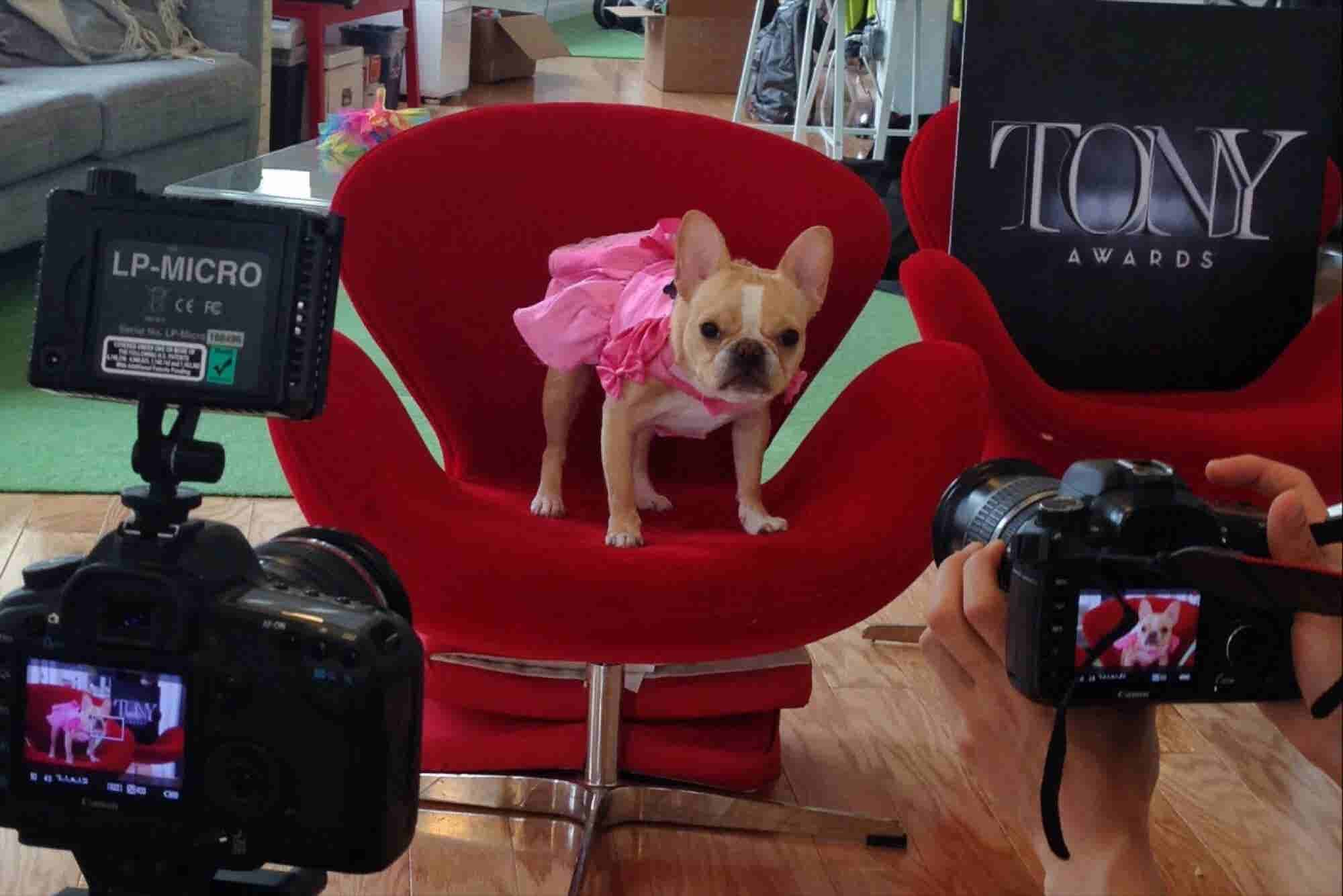 9 of the Most Entrepreneurial Dogs in America