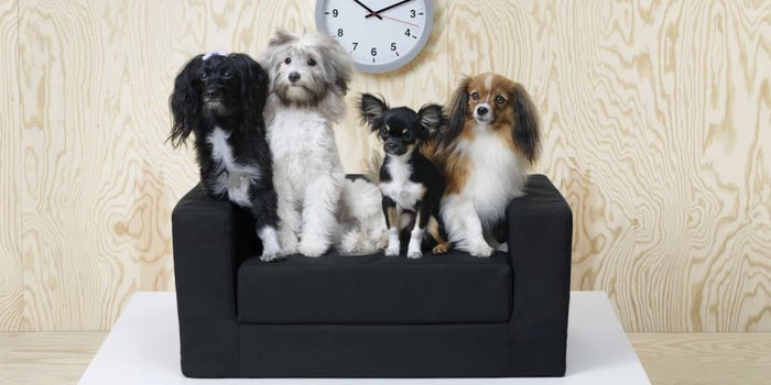 Swedish Brand Ikea Launches Modern, Affordable Pet Line